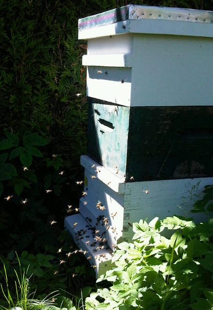 hive and bees