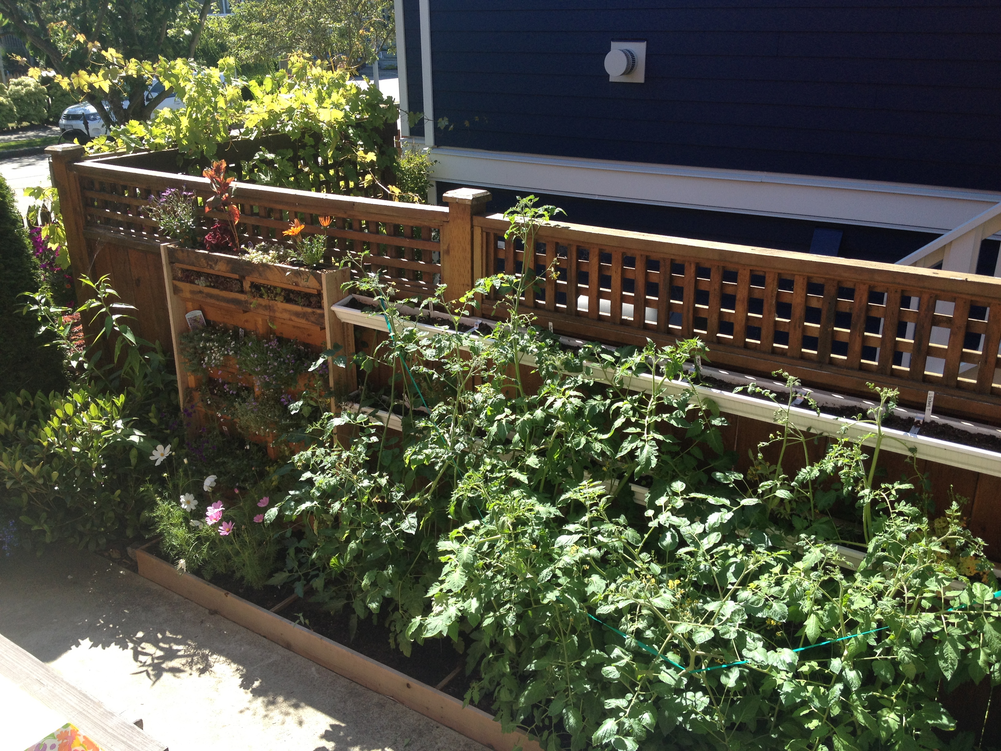 View Of Meganu0027s Green Wall From Her Kitchen Door. There Is A Pallet Garden  To