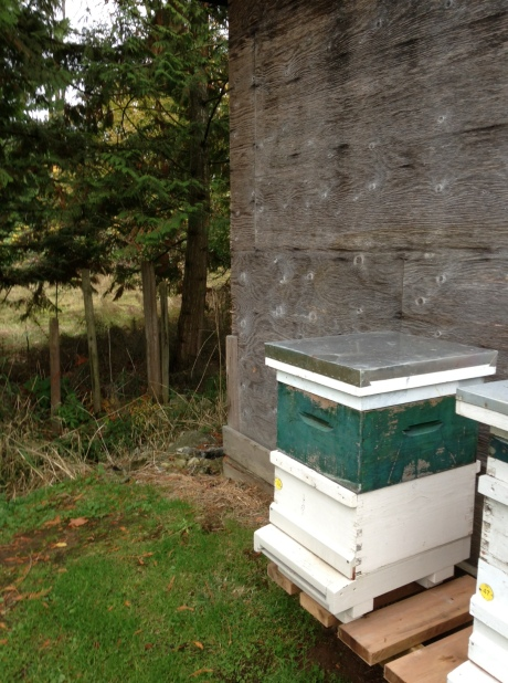 Hive 32 in it's winter home.