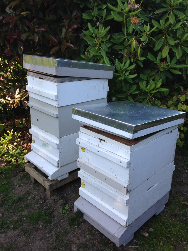 01 two hives