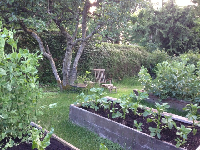01evening garden