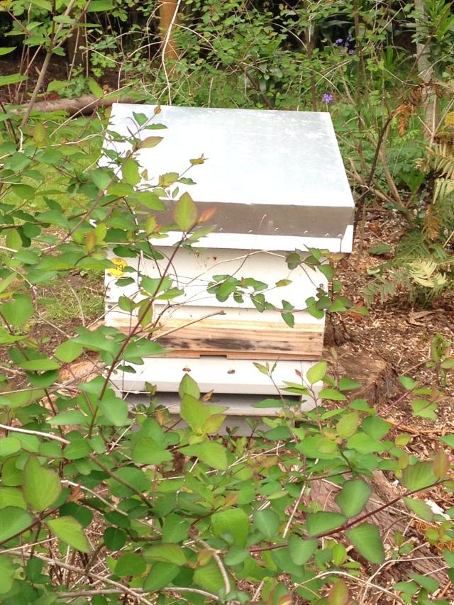 hive 49