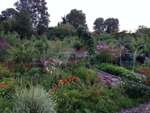 Strathcona community garden at dusk