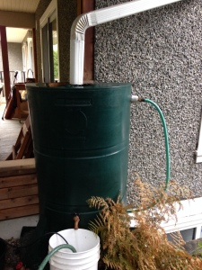 Typical Vancouver rain barrel